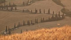 Cypresses road and wheat field at sunset zoom out Stock Footage