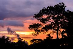Silhouette of pine tree at sunset. Stock Photos