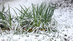 Green grass with Snow 2 Stock Footage