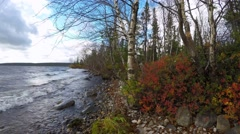 Stock Video Footage of Karelian birch, stunted spruce on the beach. Big Lake in Scandinavia, Europe.