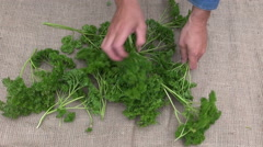 Man gardener preparing to dry  parsley on linen cloth - stock footage