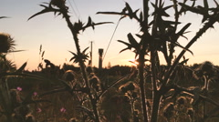 Pan grass at sunset - stock footage