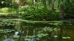 Stock Video Footage of Lily Pads and Flower in Pond in Florida, 4K
