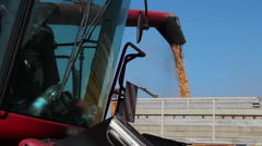 Red Combine Harvester Harvesting A Grain Field Stock Footage