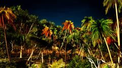 Tropical paradise - stock illustration