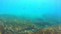 Underwater life with a school of fish Stock Footage
