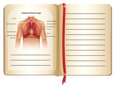 Anatomy of human lungs on page Piirros