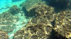 Sea urchin close-up Stock Footage