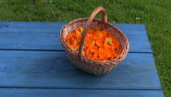 Freshly picked calendula prepared for drying in wicker basket - stock footage