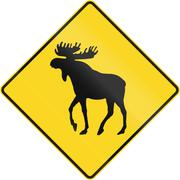 Moose Crossing In Canada Piirros