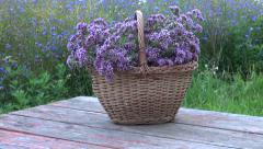 Basket of freshly picked oregano in wicker basket on red  table Stock Footage