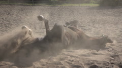 A horse basks in the sand slow motion Stock Footage