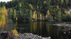 Panorama of river in wild forest Stock Footage