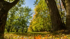 Leaf fall in the autumn city park - stock footage