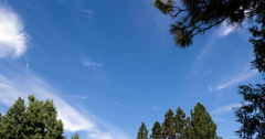 Stock Video Footage of Time Lapse Cirrus Clouds Blue Sky Between Trees 4K
