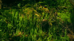 Feathers in the fern and mosses Stock Footage