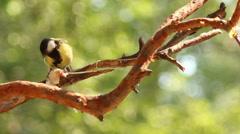 Bird pecks lard. Stock Footage