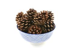 Small pine cones in a blue and white bowl - stock photo
