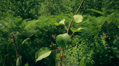 The cradle of caterpillars Stock Footage