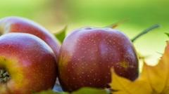 Apple harvest in autumn garden Stock Footage