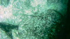 Black Trim Star Fish La Paz Mexico - stock footage