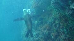 Curious Seal Esprito Santos La Paz Mexico Stock Footage