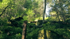 Bryophyta moss on the stone in Carpathians Stock Footage