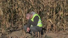 Stressful farmer on cold corn field Stock Footage