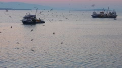 Fishing trawlers surrounded by many birds in the morning before the sunrise with Stock Footage