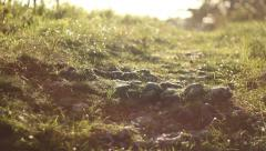 Dreamy light on a woods path Stock Footage