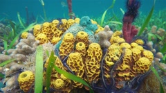 Close up of colorful marine life on the seabed Stock Footage