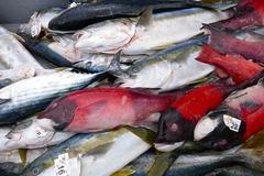 Fresh whole west coast sport fish Stock Photos