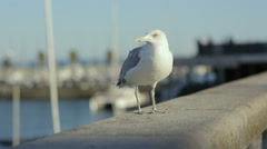 Sea gull starts fly from embankment portugal lisbon rivera ocean marina Stock Footage