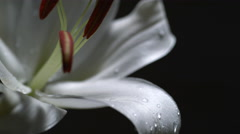 Water drop on lily. Slow Motion. Stock Footage
