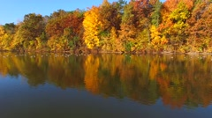 Flock of Geese Swimming Amid Fiery Autumn Scenery Stock Footage