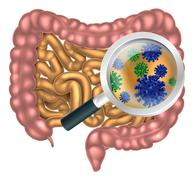 Magnifying Glass Gut Flora - stock illustration