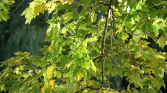Play of light on the leaves. Stock Footage