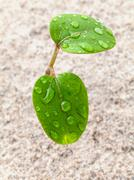 Close up raindrop on young plant growing in spring time. the beginnings from - stock photo