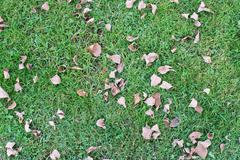 Green grass dry leaves - stock photo