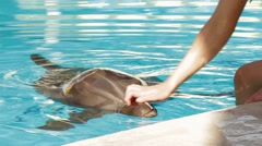 Human Hand Touching Dolphin In Pool Stock Footage