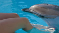 Young Girl Petting Bottlenose Dolphin - stock footage