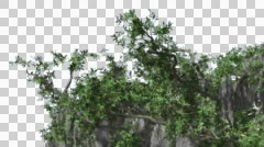 Stock Video Footage of Live Oak Evergreen Oak Tree Upper Part of Tree Crown with Catkins Green Leaves