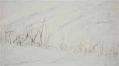 Dry grass under snow in the winter shivering in the wind Stock Footage