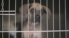 Dog Puppy at a Vet Clinic Stock Footage