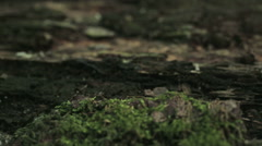 Mushrooms in a Wet Forest Stock Footage