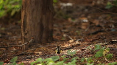 Bird in the forest. - stock footage
