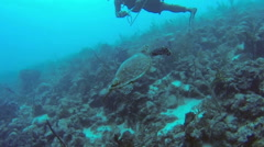Diver and turtle under water Stock Footage