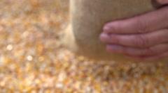 Corn grain falling down from jute bags. Slow motion 240 fps. Stock Footage