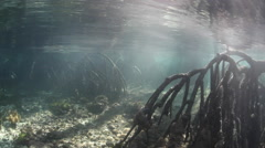 Mangrove Forest and Sunlight Underwater Stock Footage