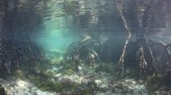 Mangrove Forest Underwater Stock Footage